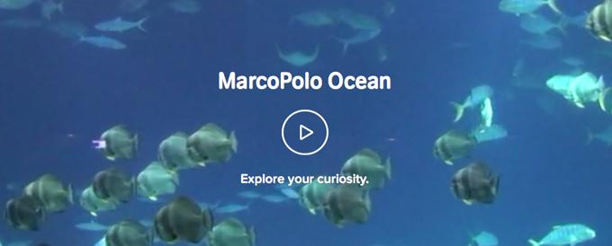 Die App MarcoPolo Ozean bringt Kindern alles über das Meer bei.